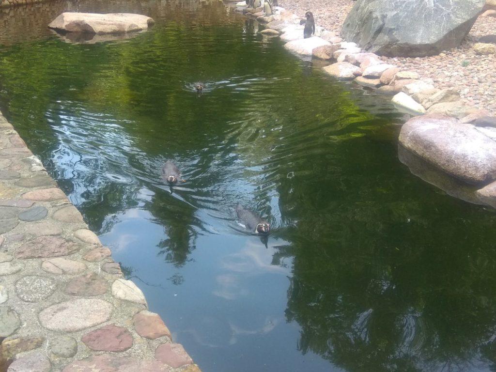 """Моя поездка к самому большому парку птиц """"Вальсроде"""" в Европе"""